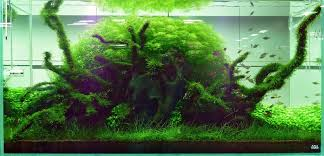 Basic Forms - Aqua Rebell Photo Planted Axolotl Aquascape Tank Caudataorg Suitable Plants Aqua Rebell Tutorial Natures Chaos By James Findley The Making Aquascaping Aquarium Ideas From Aquatics Live 2012 Part 4 Youtube October 2010 Of The Month Ikebana Aquascaping World Public Search Preserveio Need Some Advice On My Planned Aquascape Forum 100 Cave Aquariums And Photography Setup Seriesroot A Tree Animalia Kingdom Show My Our Lovely 28l Continuity Video Gallery Green 90p Iwagumi Rock Garden Page 8