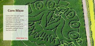 Sauvies Island Pumpkin Patch Corn Maze by 17 Sauvie Island Pumpkin Patch Corn Mazes French Prairie