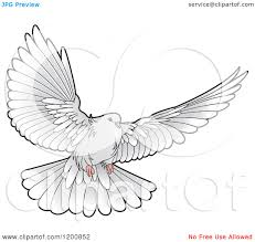 White dove flying drawing photo 26