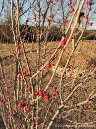 Winterberry Christmas Tree Farm Pa by Trees