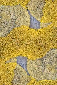 Organic Yellow And Grey Texture