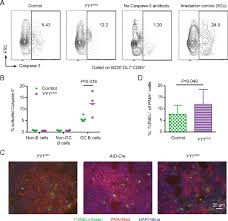 Rbc Tile Stone Of Iowa by Yy1 Regulates The Germinal Center Reaction By Inhibiting Apoptosis