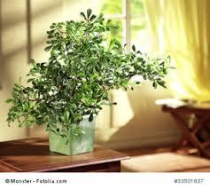 pflanzen sind im feng shui sehr wichtig feng shui ausbildung