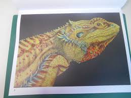 Bearded Dragon By Vanessa Nessy Peeters DragonColoring BooksColour