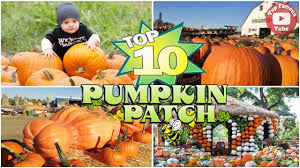Pumpkin Patch Dixon Il by Top 10 U S Pumpkin Patches You Should Know Halloween 2017 Youtube