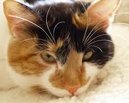 orange cat names calico cat names purrfect cat names