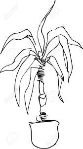 dessin en noir et blanc d un palmier dans une chambre de pot de