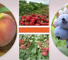 Pumpkin Picking Near Lancaster Pa by Farm Market Fresh Produce Fruits U0026 Vegetables Lancaster Pa