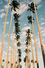 You Know LA Gals Love Palm Trees