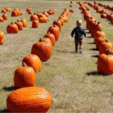 Pumpkin Patches Near Dallas Tx 2015 by The Flower Mound Pumpkin Patch 65 Photos U0026 61 Reviews Local