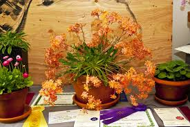 Winners of Portland Garden Club flower show announced