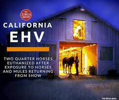 New Equine Herpes Virus Cases In California Traced To Bishop Mule ... Horse Barn Designs With Arena Google Search Pinteres Period Barnequine Equine5 Quality Structures Inc Barn Equine First Aid Medical Kit Large Station Pedernales Veterinary Center Red Outfitters In Lebanon Pa 717 8614 37x60x12 Mosely Va Era11018 Superior Buildings Free Images Shed Summer Spring Hall Facade Outside 36x10 Harrisonburg Ems16026 Farm Animal Ranch Brown Stallion The Surgery Landrover On Standby At Beach Polo Event