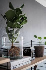 studiovea water plants der neue pflanzentrend