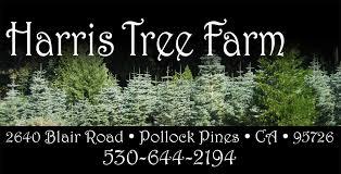 Santa Cruz Christmas Tree Farms by Harris Tree Farm Christmas Trees Pie Apple Pie Blackberry Pie