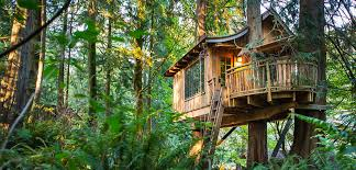 Amazing Tree Houses Picture BEST HOUSE DESIGN Amazing Tree Houses