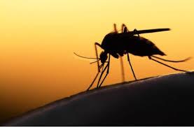 wo verstecken sich mücken im zimmer
