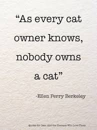 cat quotes best 25 quotes about cats ideas on quotes about pets