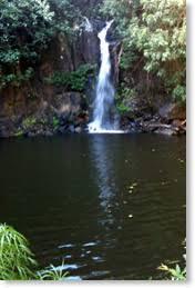 McBryde Gardens Kauai Garden Weddings Island Weddings and
