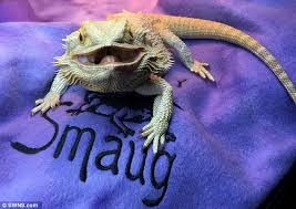 Bearded Dragon Heat Lamp Went Out by Smiling Bearded Dragon Racks Up 4 000 Instagram Followers Daily