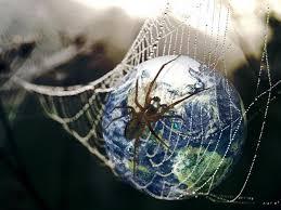 etude la toile d araignée est un filtre à pollution efficace
