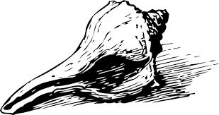 free vector Seashell clip art