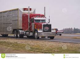 Semi Truck Pulling A Livestock Trailer Stock Image - Image Of Drive ... Semi Hauling Cattle Overturns On I15 Smashing Onto Car With 3 The Worlds Most Recently Posted Photos Of Hauler And Livestock These Are People Who Haul Our Food Across America Salt Npr No 11 Jbs Carriers Beef Central Kenworth Custom W900l Bull Bad Ass Semi Pinterest Blhauler Manners Brigshots Best Photos Flickr Hive Mind Mf Western Toy Kids Bull Hauler Truck Peterbilt Child 2 Pk 10 Top Paying Driving Specialties For Commercial Drivers Norstar Beds Iron Trailers Livestock Groups Seek Waiver From Trucking Rules Feedstuffs Cattle Pots Home Facebook