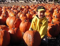 Pumpkin Picking Nj Near Staten Island by New Jersey Farm Market U0026 Garden Center Nj Farms View Farm