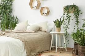 6 zimmerpflanzen für das schlafzimmer flaechenlust