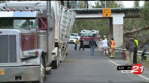 Truck Hits RR Bridge, 4 Calves Die: Is There A Fix? - KTVZ Semitruck Cattle Accident Youtube Video Appears To Show Live Cow Scooped Up In Dump Truck After Semi Overturns Near Okarche Kforcom Trailer Flips On E Highway 50 No 17 Richardson Bros Beef Central Truck Ploughs Through Herd Of Cattle Ladysmith Gazette Crash 1 Clarksvillenowcom Westbound Us412 Lanes Open After Crash Spill Cleaned With A Lot Help Krvn Radio Crashes Hwy 15 News Channel Nebraska Causes Problems I71