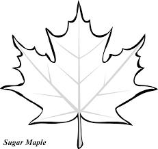 Maple Leaf Graphic