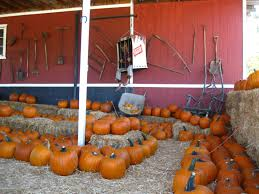 Oak Glen Pumpkin Patch Address by Pumkin Patch Inland Empire Pumpkin Farm Redlands U Pick Holloween