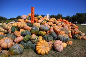 Pumpkin Patch Marble Falls by Pumpkins Hayrides U0026 More At Sweet Berry Farm U2013 Do512 Family