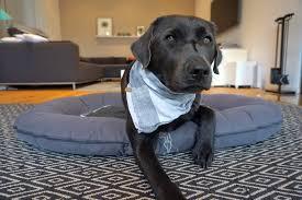 das beste hundebett für deinen hund unsere empfehlungen