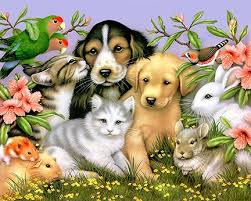 a prayer for animals in honour of st francis of assisi pastor s