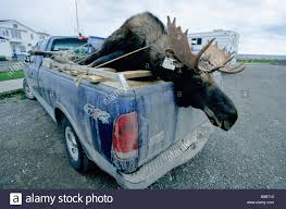 Truck Loaded Dead Bull Moose, Gaspesie Peninsula, Quebec Stock Photo ... Peninsula Truck Lines Peninsula_truck Instagram Profile Picbear Parts On Mornington Vic 3931 Whereis Archibalds Book Details Life Of Peninsula Truckers Sequim Gazette Baja 1000 An Allnew Trophy Taking On The Pens Emergetms Help Center Livestock Auckland Transport Twitter Thanks Pshem Well Log A Job For Removals Small Truck Obriens Storage Community Acvities Washington School Supply Drive Competitors Revenue And Employees Owler Shield Force Excercise 9th Edition Military In The