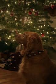 Deer Ticks On Christmas Trees by Pet Health U2013 Hale Pet Door Pet Tips