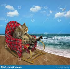 Cat In A Rocking Chair On The Beach Stock Image - Image Of ... Wooden Puppet On The Wooden Beach Chair Blue Screen Background Outdoor Portable Cheap Rocking Chairpersonalized Beach Chairs Buy Chairpersonalized Chairsinflatable Chair Product Coastal House Art Blue Sharon Cummings Tshirt Miniature Of A In Front Lagoon Hot Item High Quality Telescope Casual Sun And Sand Folding Bluewhite Stripe Version Stock Image Image Coastal Print Cat In A On The Stock Tourist Trip Summer Travel White Alexei Safavieh Fox6702c Bay Rum Na Twitteru Theres Rocking