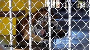 Tony The Truck Stop Tiger September 28, 2015 (2) - YouTube