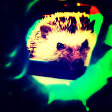 What Heat Lamp To Use For Hedgehogs by October 2015 U2013 Hanzo U0026 Friends Responsible Pet Care Information