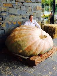 Heaviest Pumpkin Ever by Giant Pumpkin Seeds Worlds Biggest From Wallace U0027s Whoppers
