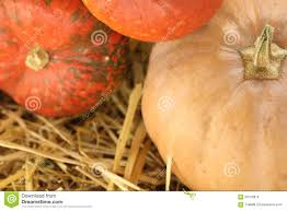 Types Of Pumpkins And Squash by Different Types Of Pumpkins Stock Photo Image 60702876