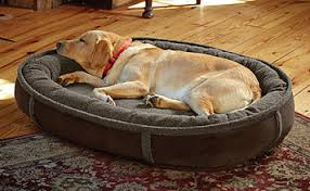 Trusty Pup Dog Bed by Best 34 Adorable Dog Beds Cheap Pet Beds Ideas Fallinpets