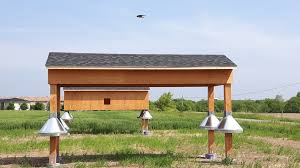 Saving Ontario's Barn Swallow Population - Blog - Cole Engineering ... Natures Engineers Bird Nests The Transient Biologist Travels With Birds Our Second Barn Swallow Hirondelle Rustique Nesting Structure Ask An Expert American Robin Nest Box Plans Those Guys Have Got To A Swallows And Social Cues Beco Swallow Flying Nest At Nosegawa Middle School In Swallows Being Procted King Weekly Sentinel How To Prevent From Building On Your Porch Youtube Earth Rangers Wild Wire Blog