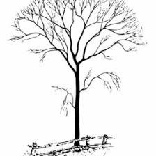 Free Winter Tree Coloring Pages Aquadiso