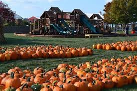 Pumpkin Patch Homer Glen Il by 10 High Energy Pumpkin Patches Near Chicago Kidtrail Com