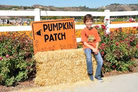 Pumpkin Patch Cal Poly Pomona by Creative Sparks October 2009