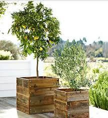 Pallet Wooden Planter Boxes