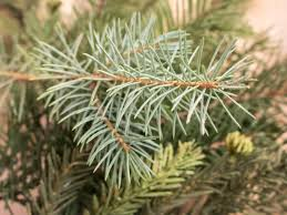 Are Christmas Tree Needles Toxic To Dogs by Tree Care Tips To Make Your Holiday Shine Diy Network Blog Made