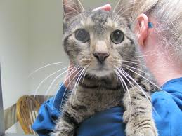 renal failure in cats crf dr doug