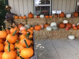 Columbus Pumpkin Patch by 10 Best Pumpkin Patches In Columbus In 2017